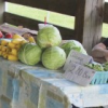 Farm Fresh Friday to highlight local food