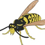 Wasps, hornets, and yellowjackets; Bees pose health threat