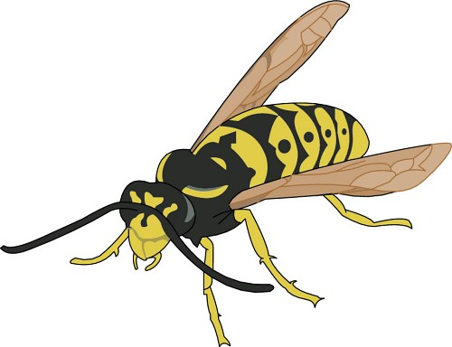 free clip art yellow jacket - photo #35