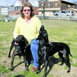 Plotts hounds head to New York City